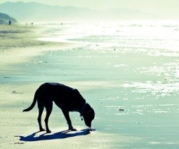 Photo of our family dog Domino at the beach